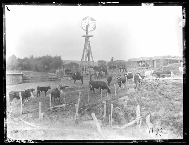 Farm scene with cattle and horses.