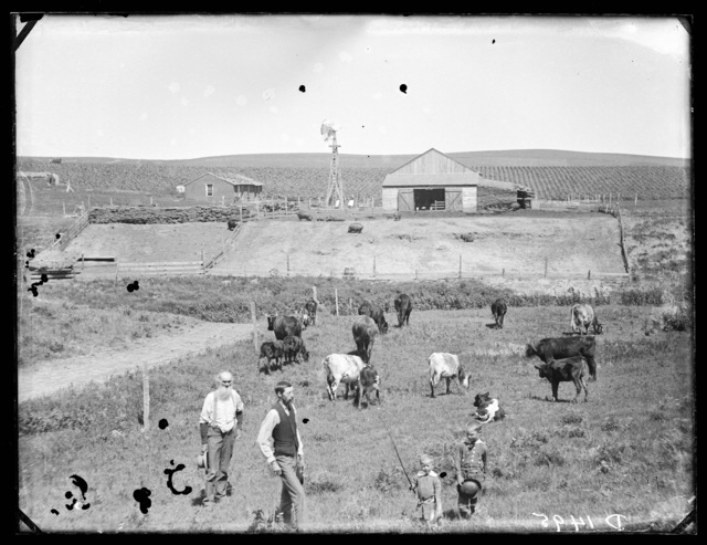 Ross Anderson, east Custer County, Nebraska.