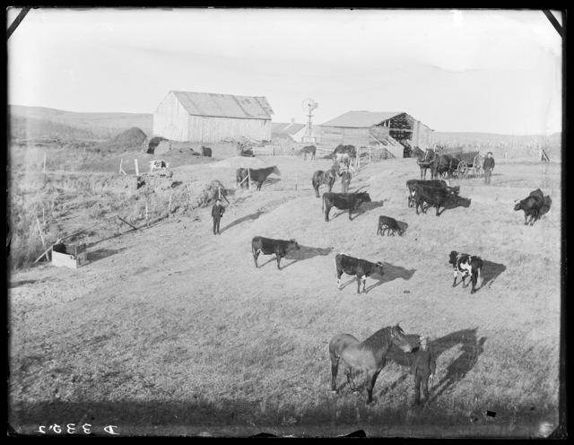 Stock ranch in Custer County, Nebraska.