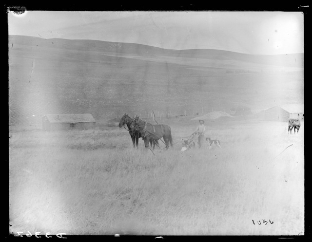 A man behind team of horses with a walking lister and planter box, Custer County, Nebraska.