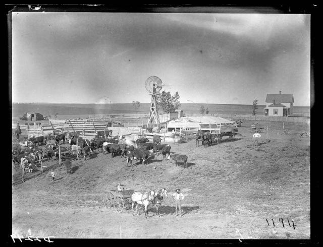 Stock farm, north Custer County, Nebraska.