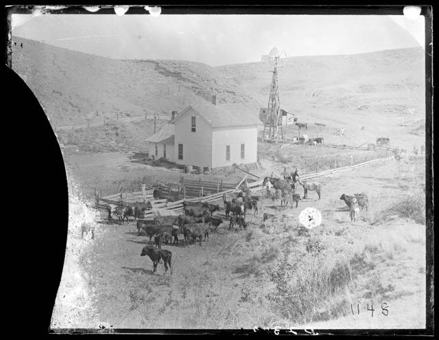 Stock Ranch, Custer County, Nebraska.