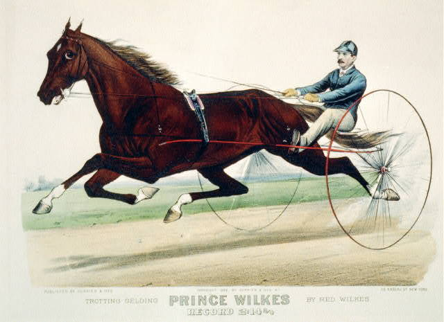 Trotting gelding Prince Wilkes by Red Wilkes: record 2:14 3/4