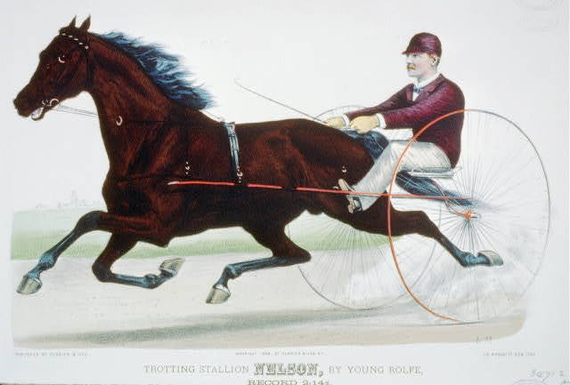 Trotting stallion Nelson, by Young Rolfe: record 2:14 1/4