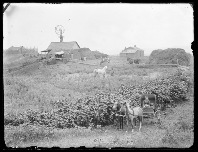 Woman with horse and buggy in farm scene - northwestern part of Custer County, Nebraska.