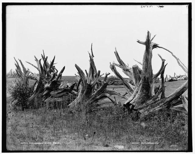 A New England stump fence