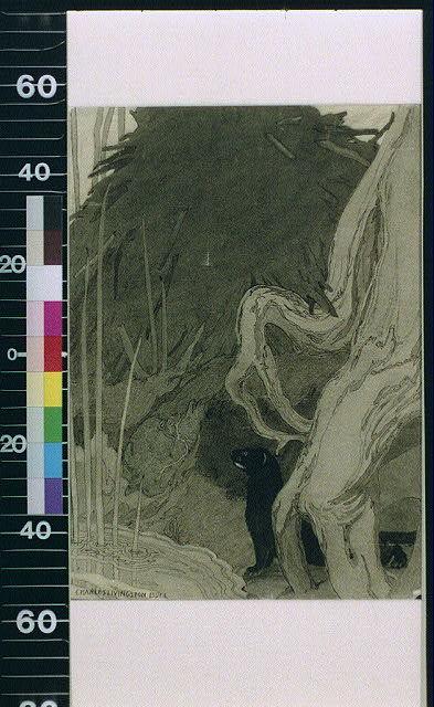 [Black badger in forest]