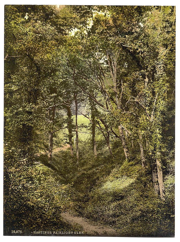 [Fairlight Glen, Hastings, England ]