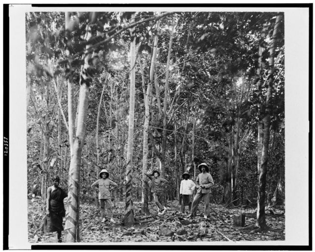 [Five people among rubber trees, Singapore]