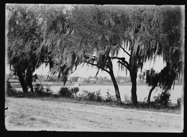 [Glimpse of Lake Eola], Orlando, Fla.