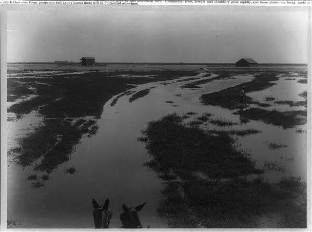 [Jackson Ranch--Irrigating alfalfa: filling a check--Kern County, California]