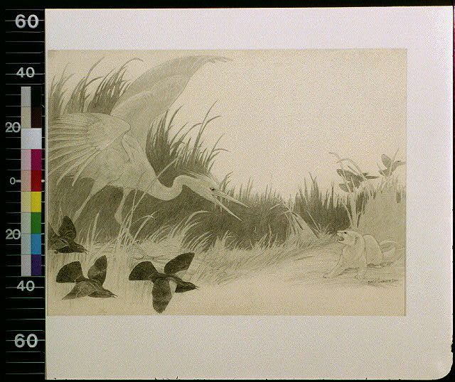 [Large bird and small birds attacking badger]