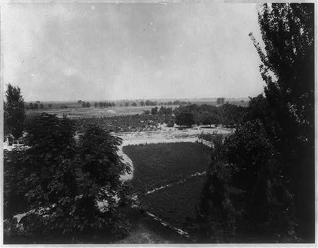 Old orchard and vineyard from the superintendent's house, Kern County, Calif.