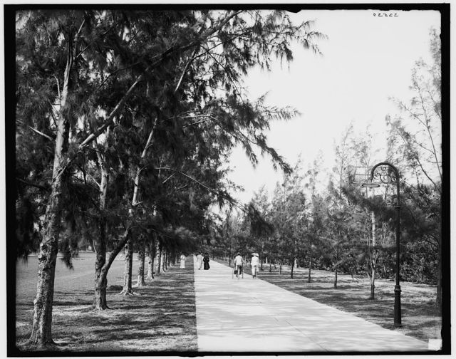 [Palm Beach, Fla., bicycles and wheelchair path between Poinciana and Breakers]