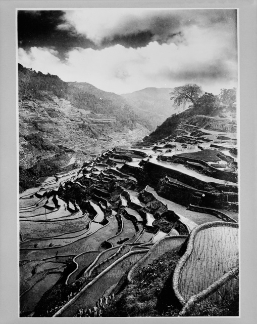 [Rice terraces carved out of the hillsides hundreds of years ago by Ifuago farmers, Philippine Islands]