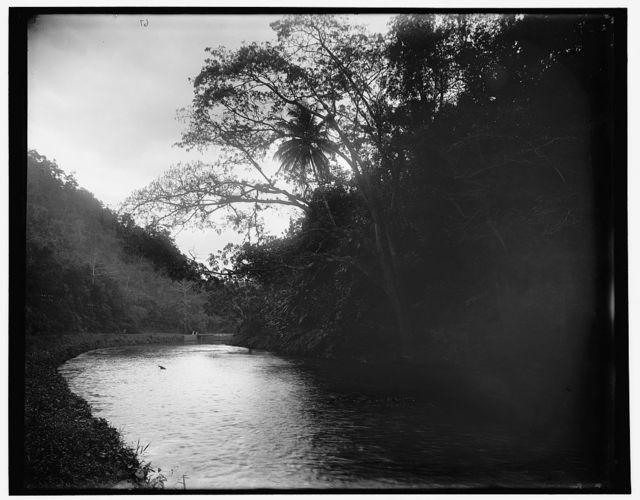 Rio Cobre near Spanish Town, Jamaica, W.I.