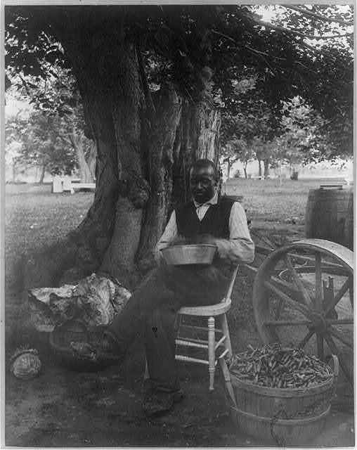 [The cook at Marshall Hall, seated outdoors, shelling peas?]