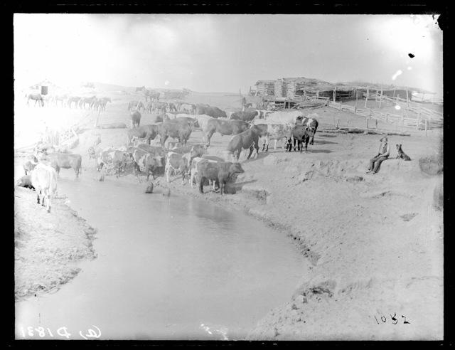 Thomas Langhron, Victoria Creek, Custer County, Nebraska.