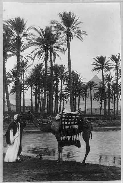 [Village and palm trees by a lake with a pyramid in the distance, before 1923, Egypt. Camel and native in foregrd.]