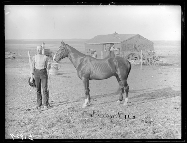 """Almont,"" a stallion on a ranch in southwest Custer County, Nebraska."