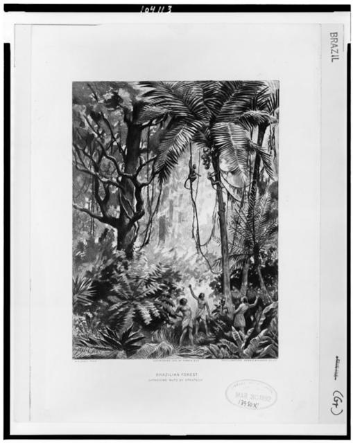 Brazilian forest.  Gathering nuts by strategy / H.N. Cady, pinx. ; photogravure, Gebbie & Husson Co., Ltd.