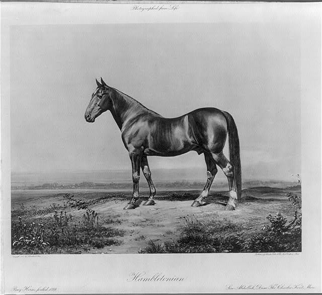 Hambletonian. Bay horse, foaled 1849. Sire Abdullah, Dam The Charles Kent Mare