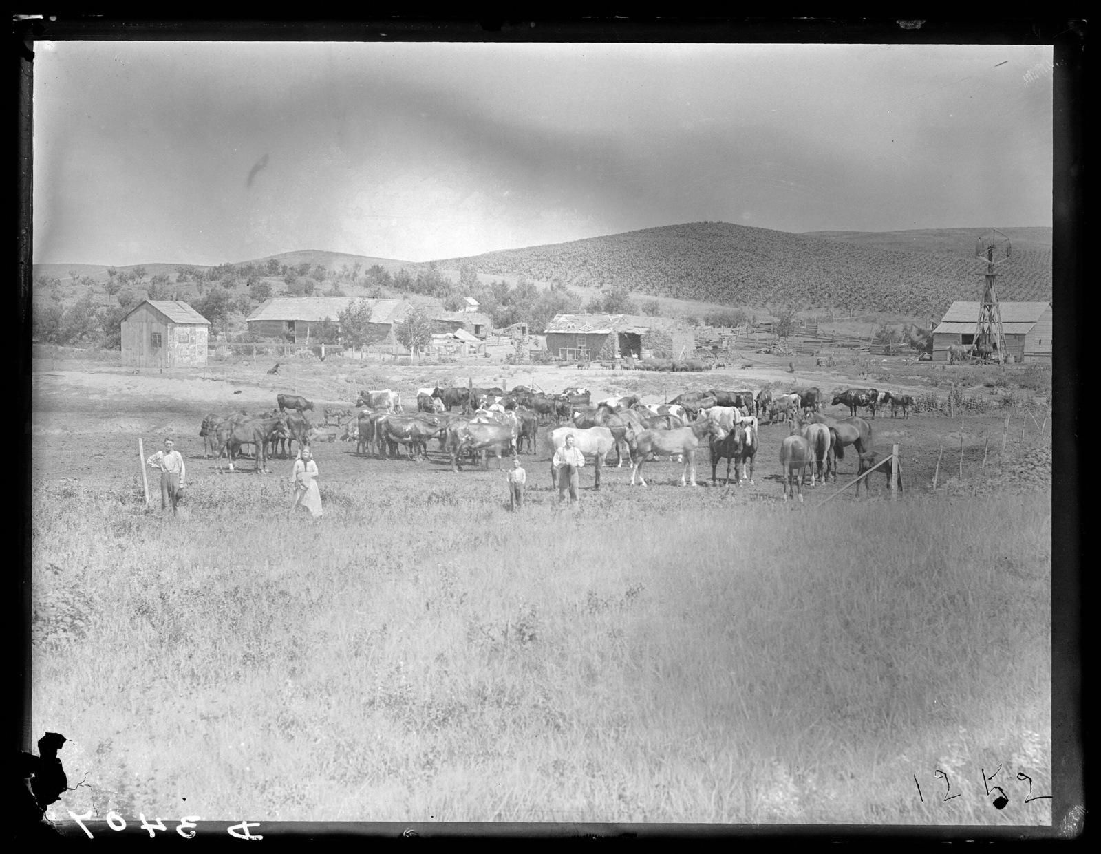 Mahot ranch six miles north of Broken Bow, Custer County, Nebraska