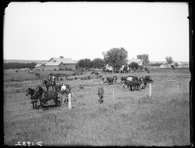The Old Brighton Ranch.  R.C. Chumbley's cattle and residence on the ranch near the South Loup River, below the old Olive Ranch, in Custer County, Nebraska.