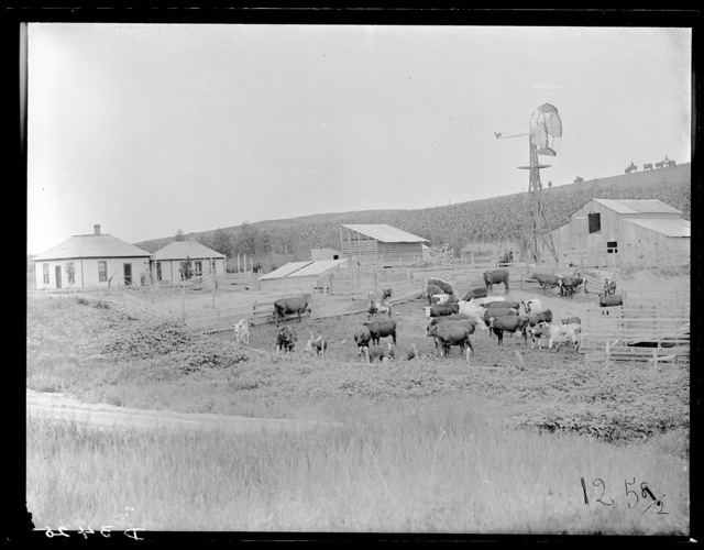 William Engall ranch near Triumph on the South Loup River, east of Arnold, Nebraska.