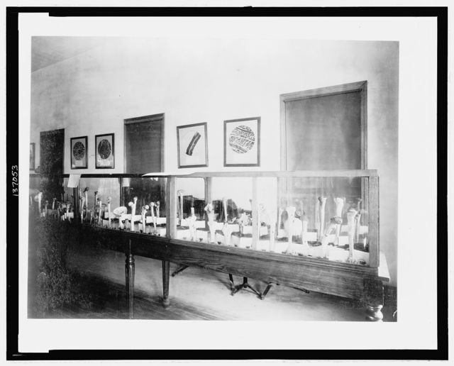 [Display of human bones, probably by the U.S. Surgeon General, at the Chicago's World's Columbian Exhibition]