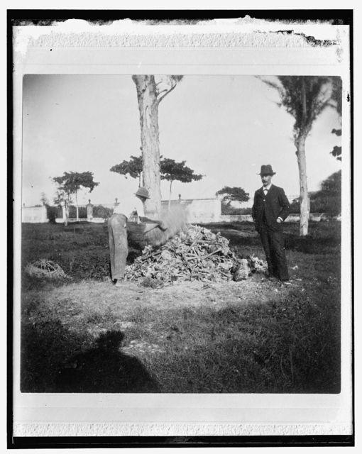 [Heap of bones in the cemetery, Necropolis Cristobal Colon, Havana]