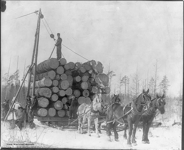 Logging in Minnesota