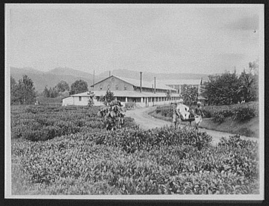 Planter in ricksha in front of the Maria Watta tea factory near Gampola