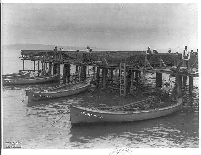 """[Salmon fishing on Columbia River, Ore.: """"loading the nets""""]"""