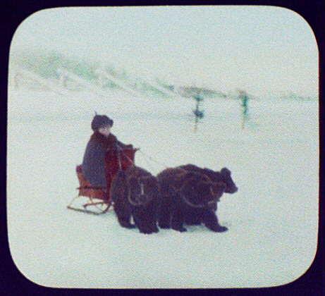 Irkutsk (?) - boy on small sledge pulled by 3 bear cubs