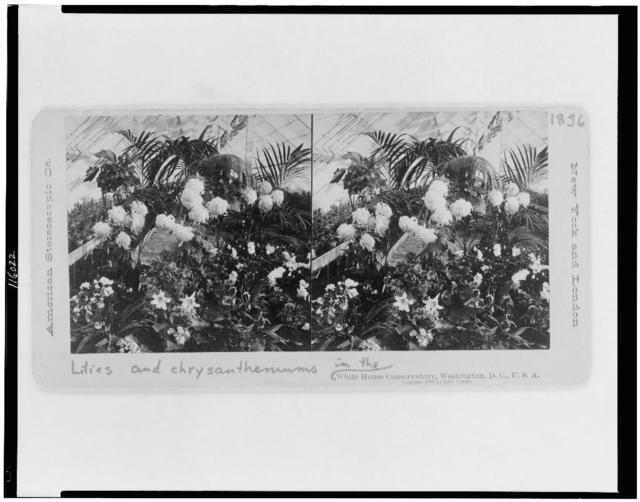 Lilies and chrysanthemums in the White House conservatory, Washington, D.C., U.S.A.