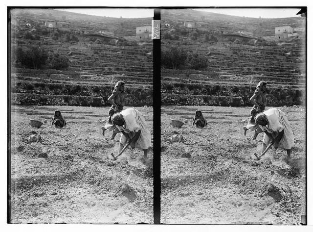 Agr. [i.e., agriculture], working in the fields