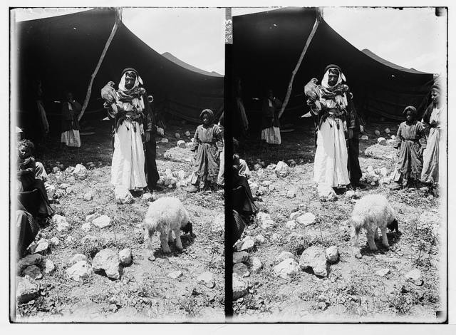 Bedouin man & hunting falcon w/child