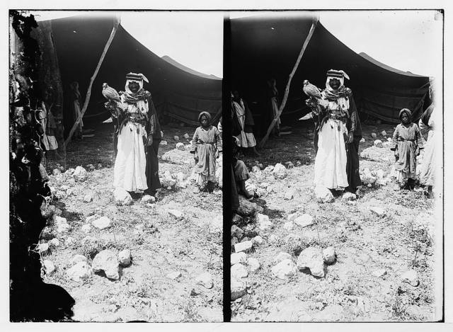 Beduin [i.e., Bedouin] with falcon for hunting
