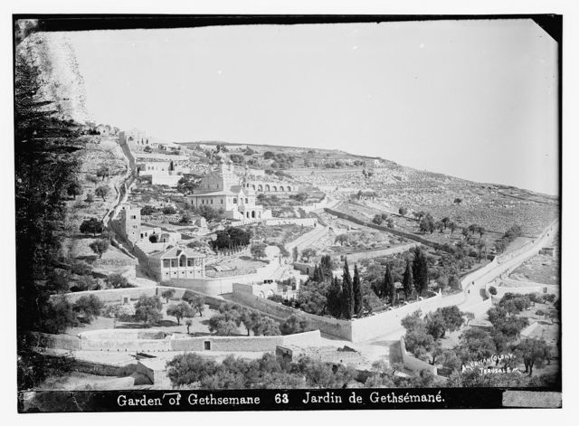 Garden of Gethsemane / American Colony, Jerusalem.