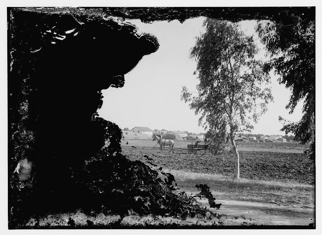 German Colonies in Palestine. Wilhelm [i.e., Wilhelma] & Sarona