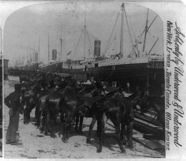Loading the mules for Cuban Invasion, Tampa