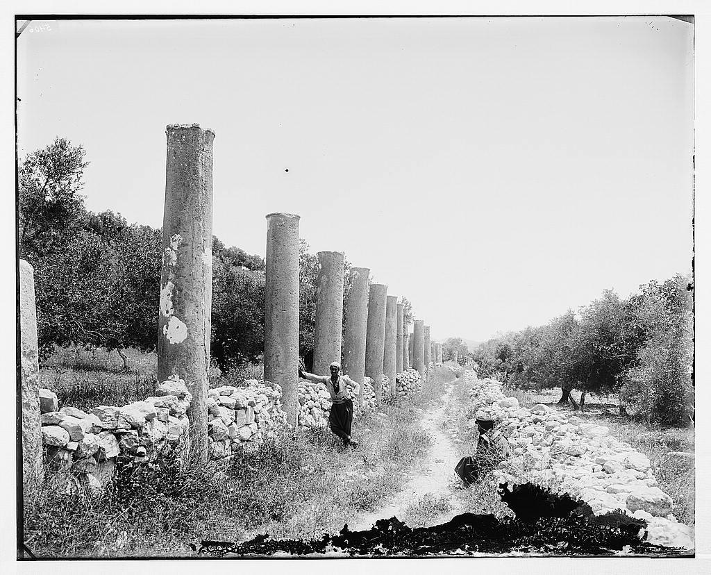 Northern views. Grand Colonnade of Samaria
