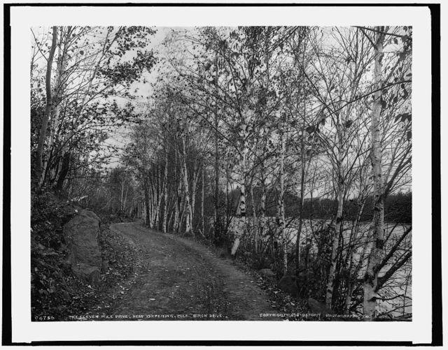 On the eleven mile drive near Ishpeming, Mich., birch drive