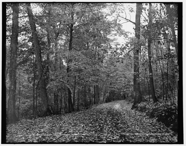 On the eleven mile drive near Ishpeming, Mich., October leaves