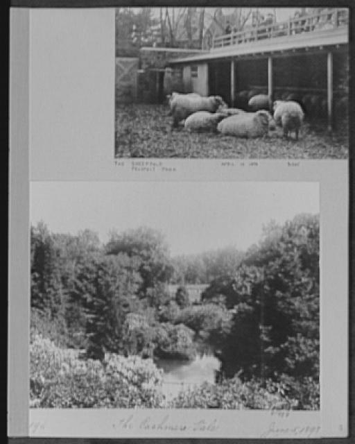 Seventy-one years, or, My life with photography. Sheepfold, Prospect Park, Apr. 10, 1898; Cashmere Vale, June 5, 1898