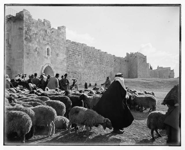 Sheep market outside Herod's Gate.