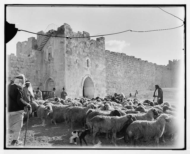 [Sheep market outside Herod's Gate]