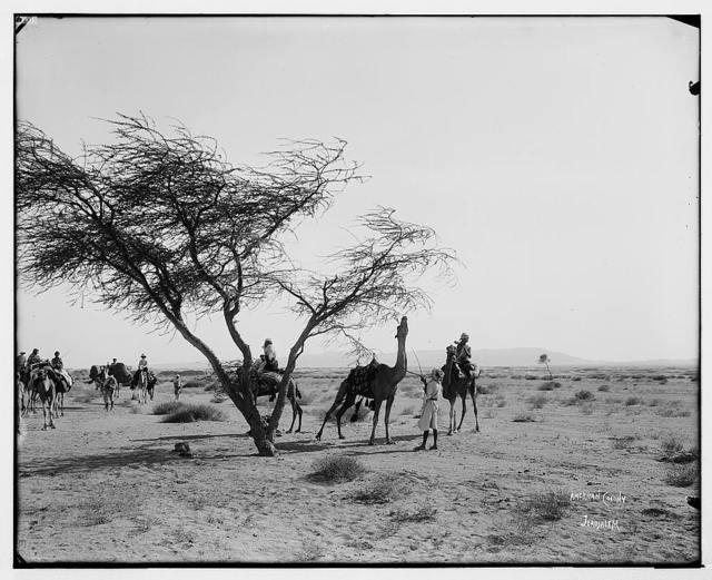 Sinai. Caravan in the heart of the desert of el-Ka'a (Wilderness of Sin). / American Colony, Jerusalem.