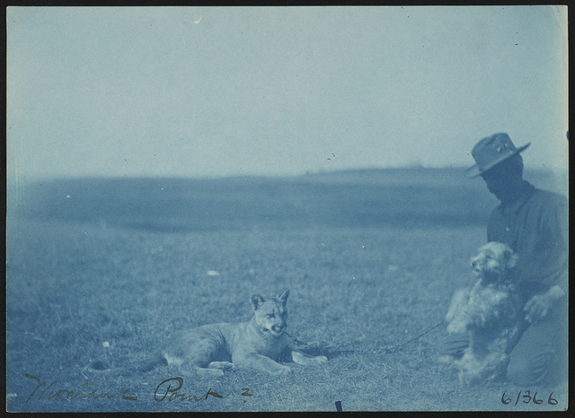 [Soldier with animals at military camp, Montauk Point, New York]
